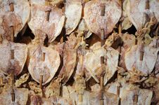 Dried Squid. Stock Image