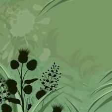 Free Weeds Stock Photo - 23647690