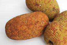 Free Cempedak Fruits Royalty Free Stock Image - 23647736