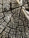 Free Old Cracked Wood Stock Photography - 23650842