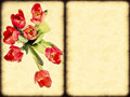 Free Tulips Royalty Free Stock Image - 23656276