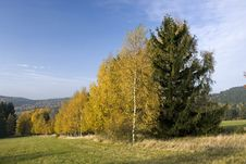 Free Autumn Landscape With Birches Stock Photography - 23651372