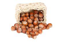 Basket With Hazelnuts Stock Photos