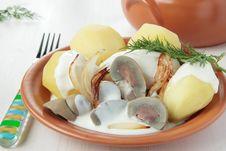 Beef Kidneys In Cream Sauce Stock Image