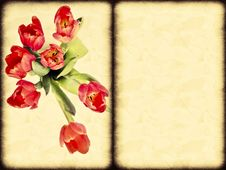 Free Tulips Royalty Free Stock Image - 23656276