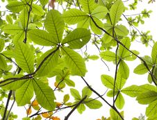 Free Leaves Background Stock Photo - 23656910