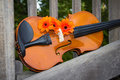 Free Violin And Flowers Royalty Free Stock Image - 23661296