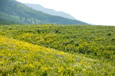 Free Field Of Wildflowers In A Mountain Range. Stock Photography - 23661252