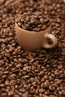 Free Coffee Beans Royalty Free Stock Photo - 23661615