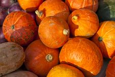 Free Pumpkins On Sale Royalty Free Stock Photo - 23662915
