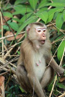 Free Monkey Stock Photo - 23667960