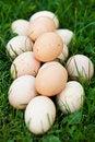 Free Fresh Eggs In Garden Royalty Free Stock Photos - 23676078