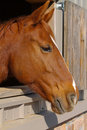 Free Horse Profile Stock Images - 23679414