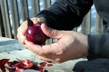 Free Peeling Red Onion Stock Photography - 23674602
