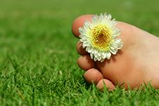 Free Feet And The Flower Royalty Free Stock Photos - 23674638