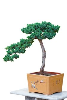 Free Pine Bonsai Stock Image - 23675371