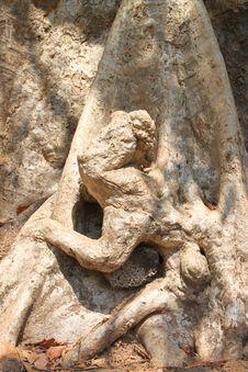 Free Monkey Shape At The Bottom Of Tree Stock Image - 23676011