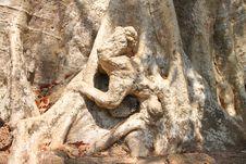 Free Monkey Shape At The Bottom Of Tree Stock Image - 23676051