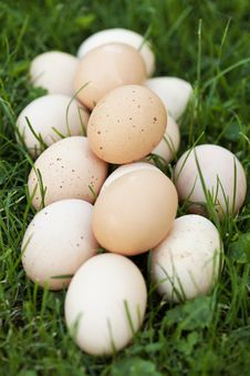 Fresh Eggs In Garden Royalty Free Stock Photos