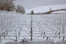 Free Snow Covered Vineyard In Oregon Royalty Free Stock Images - 23678349