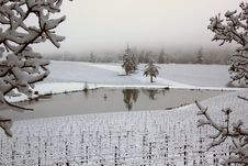 Free Oregon Snow Covered Vineyard With Pond Reflection Stock Images - 23678354