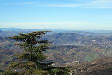 Pine On Mountainside Royalty Free Stock Image