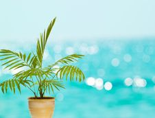 Free Tropical Palm In Pot Stock Photos - 23684103