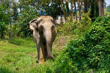 Free Elephant Stock Photo - 23688380