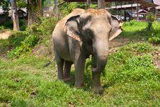 Free Elephant Stock Image - 23688501