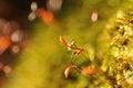 Free Moss Macro Detail Royalty Free Stock Image - 23696616