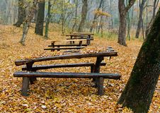 Free Wooden Tables In The Forest Royalty Free Stock Photography - 23692157