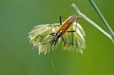 Free Long Bug Stock Photo - 23693030