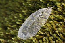Free Leaf Skeleton On Green Moss Royalty Free Stock Photos - 23699388