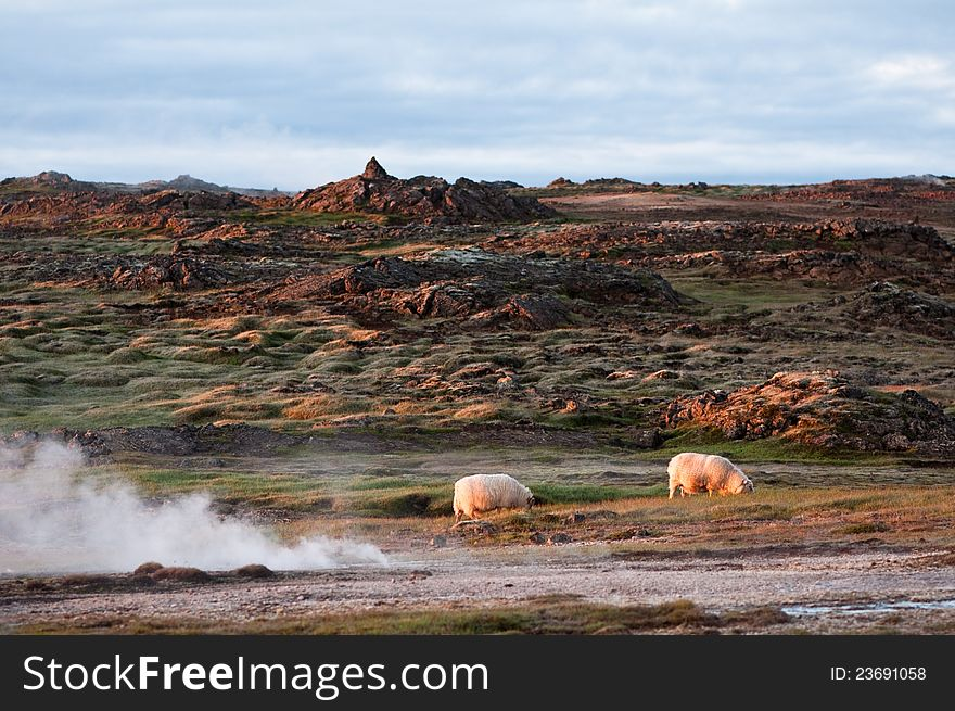 Beautiful Iceland scenery with pair of sheep