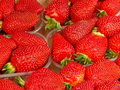 Free Strawberries Royalty Free Stock Photography - 2378347