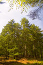 Free English Wood In The Spring Stock Photo - 2378730