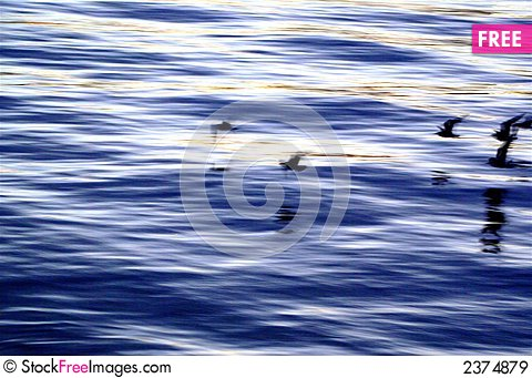 Free Birds In Motion On Thames Rive Royalty Free Stock Images - 2374879