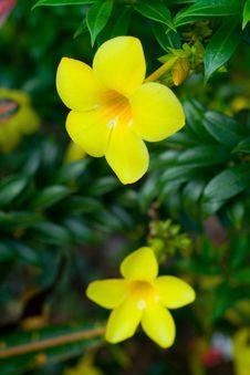 Free Wild Flower Stock Photography - 2370152