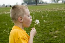 Free Dandelion Blowing In The Wind Stock Photo - 2370160