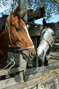 Free Horses Royalty Free Stock Image - 2370406