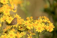 Free Butterflies On Daisies Royalty Free Stock Photography - 2370727