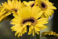 Free Anomalous Yellow Flower Stock Photos - 2372743