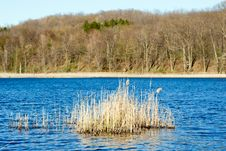 Free Spring Pond Royalty Free Stock Photography - 2373467