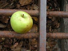 Free Discarded Apple Stock Photo - 2374620