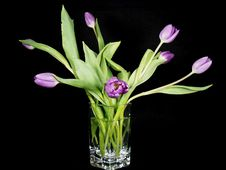 Free Tulips In Crystal Royalty Free Stock Photos - 2374838