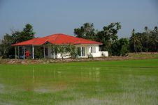 Farm House And Paddy Field Royalty Free Stock Photo