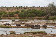 Free Hippos Stock Image - 2376411