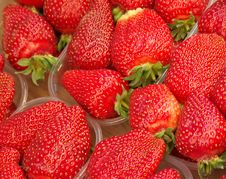 Free Strawberries Royalty Free Stock Images - 2378379