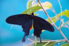 Free Butterfly In The Greenhouse Stock Photo - 2378880
