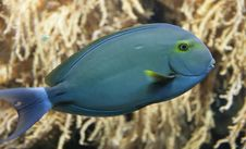 Tropical Fish 6 Stock Images